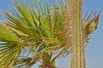 Vacances Egypte Mer Rouge 2014_108