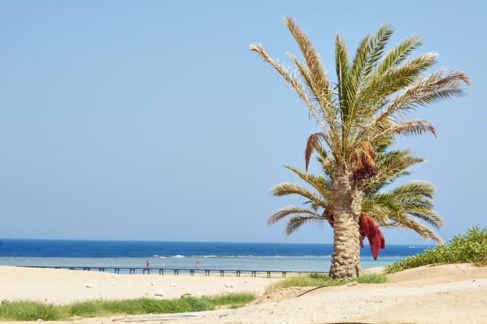 Vacances Egypte Mer Rouge 2014_159