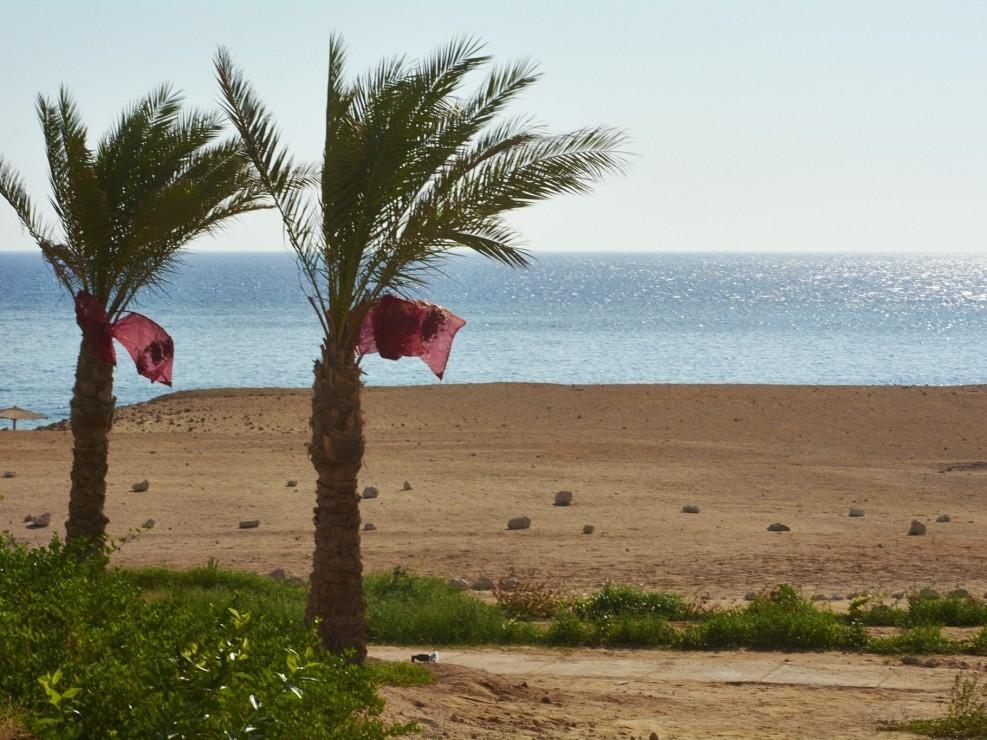 Vacances Egypte Mer Rouge 2014_99