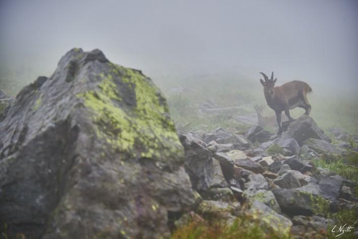 Aiguilles rouges Chamonix Massif du mont blanc-NIKON D800E-2-4-