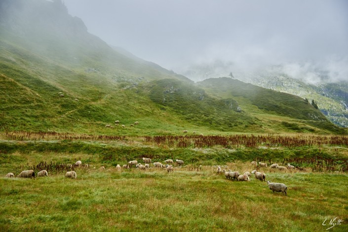 Aiguilles rouges Chamonix Massif du mont blanc-NIKON D800E-21-4-