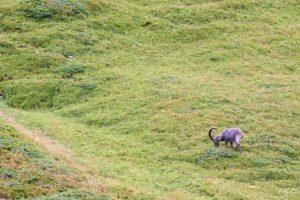 Aiguilles rouges Chamonix Massif du mont blanc-NIKON D800E-33-4-