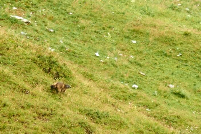 Aiguilles rouges Chamonix Massif du mont blanc-NIKON D800E-37-4-