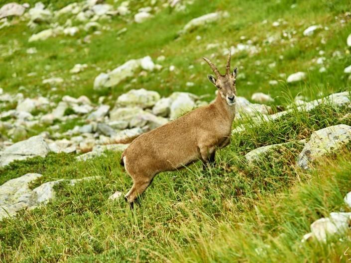 Aiguilles rouges Chamonix Massif du mont blanc-NIKON D800E-43-4-