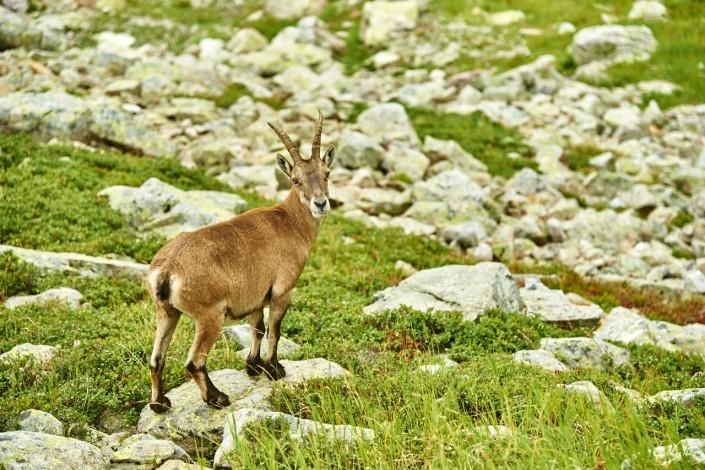 Aiguilles rouges Chamonix Massif du mont blanc-NIKON D800E-44-4-