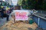 53Manifestation producteur de lait 07-09-15 NIKON D800E A4 38 mm