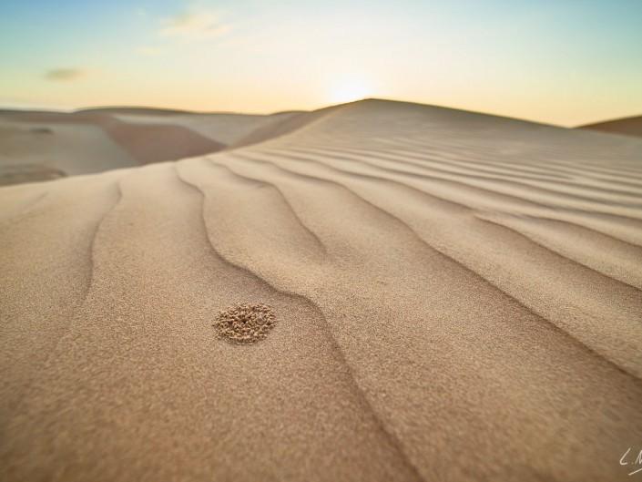 Oman – Dubai-077 -NIKON D800E-4.5-14 mm
