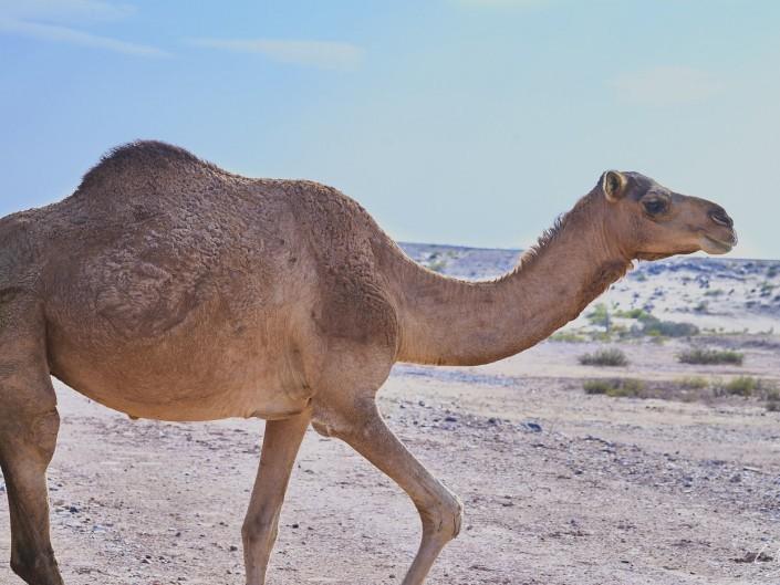 Oman – Dubai-089 -NIKON D800E-7.1-85 mm