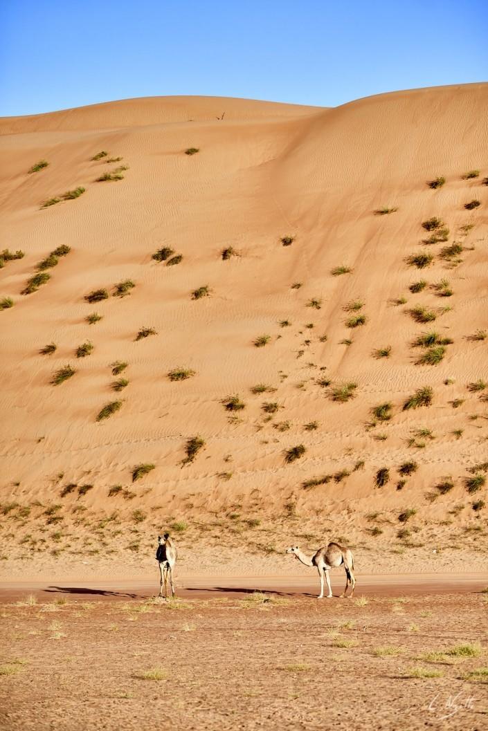 Oman – Dubai-122 -NIKON D800E-2.8-85 mm