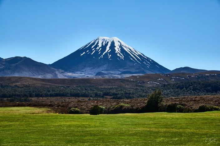 0039- Nouvelle Zelande- 78 mm – A11 –