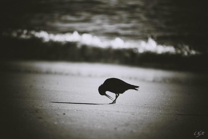 0068- Nouvelle Zelande- 300 mm – A4 –