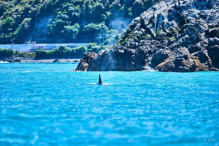 0105- Nouvelle Zelande- 300 mm – A4 –