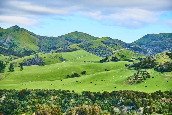0108- Nouvelle Zelande- 65 mm – A4 –