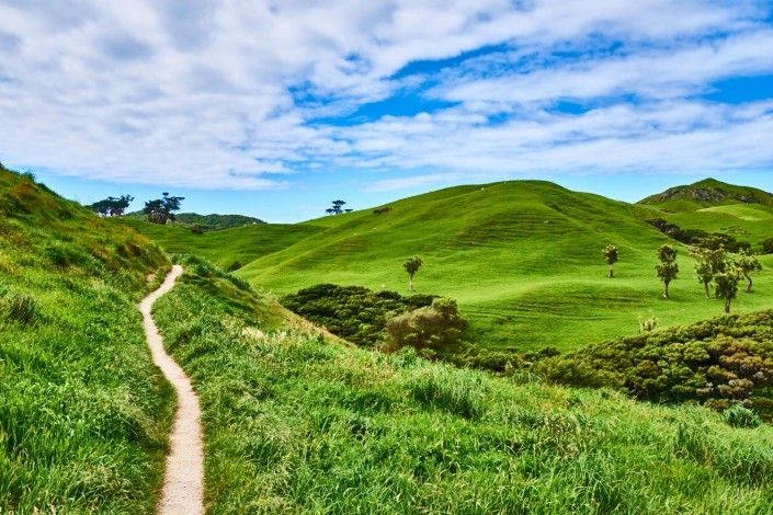 0112- Nouvelle Zelande- 31 mm – A11 –