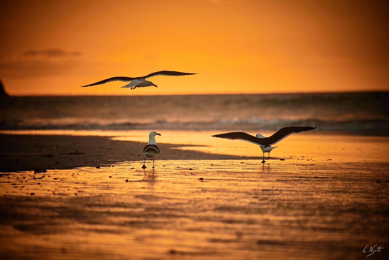 L'envol des oiseaux dans le soleil - être heureux